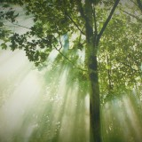 forest-612519_1280