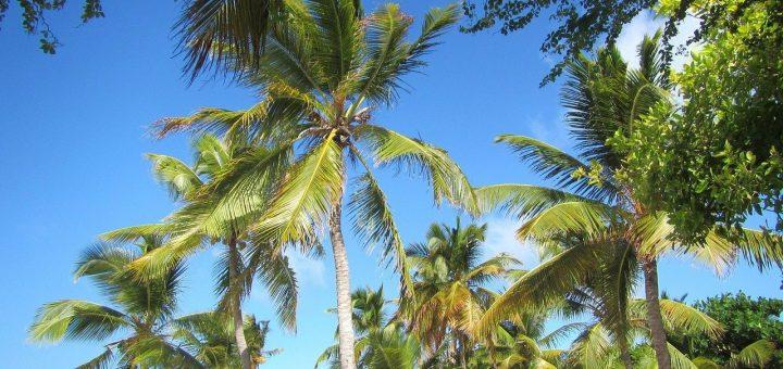 palm-289135_1280